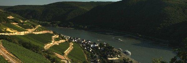 Le « Rheingau »: paysage grandiose et vins sublimes