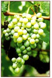 Vins de Madère…Dégustation