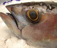 Les restaurants Relais et Chateaux ne serviront plus de thon rouge