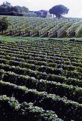 EDITO : Conseil Interprofessionnel des Vins de Bordeaux