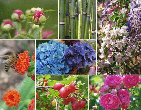 espace-jardin-et-plantes