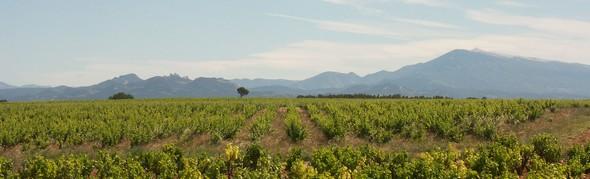 «Châteauneuf du Pape» et «Tavel»: Deux vignobles «phares» de la Côte du Rhône