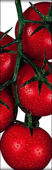 Tartare de tomate au basilic et caillé de chèvre, granité de tomate au basilic et citron vert