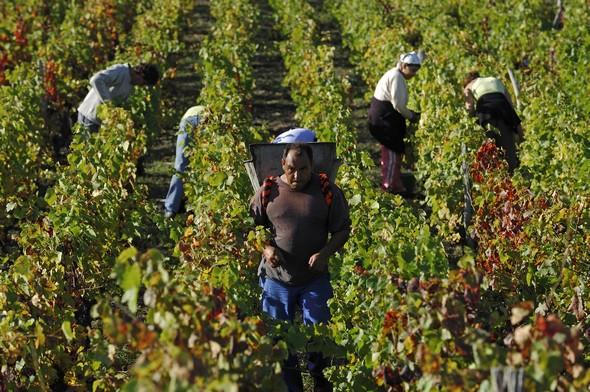 Les Côtes d'Auvergne, un vignoble en plein devenir