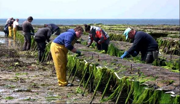 Le travail des hommes à Blainville © G.C/laradiodugout.fr