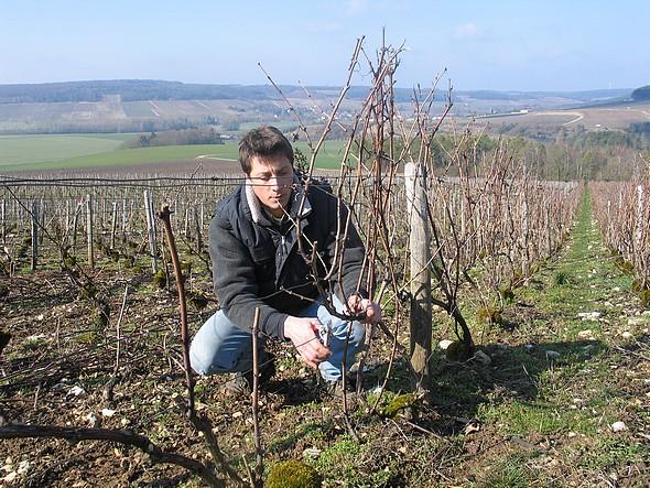 vignes sans herbicides