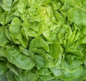 Nette progression de l'agriculture bio en France