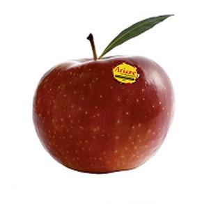 La Radio du Goût a aimé: Ariane, la jolie pomme rouge  qui monte…