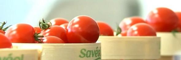 saveol-tomates