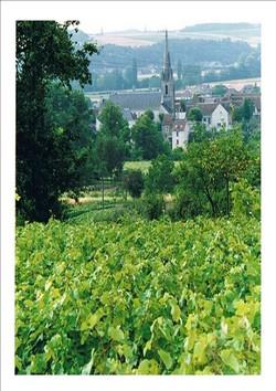 les vignes des coteaux du vendomois ©DR