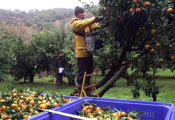récolte ©G.C/laradiodugout.fr