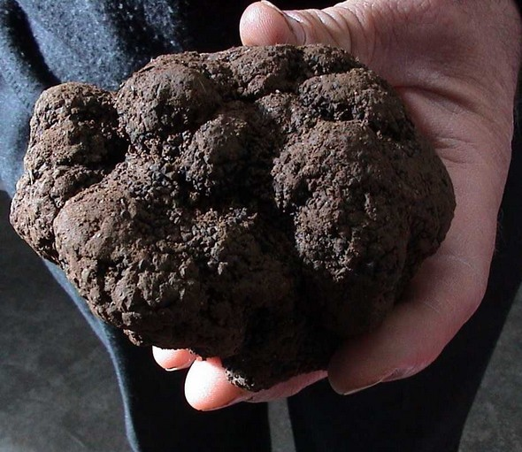 La Radio du Goût aime: la fête de la truffe à sorges en Périgord