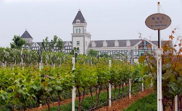 Chateau Changyu Castel à Yantai. Le vignoble de Yantai est l'un des 7 principaux vignobles côtiers du monde ©Janis Miglavs