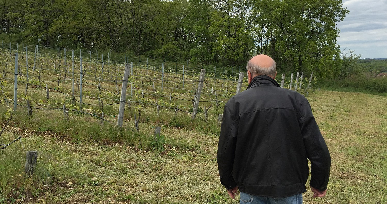 francis dans sa vigne