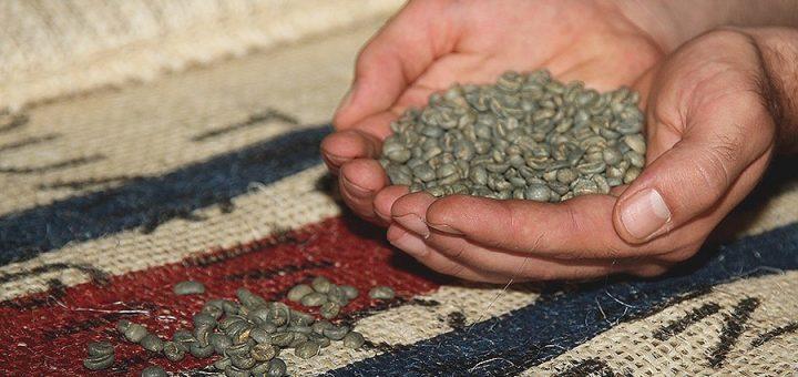 la qualité des grains
