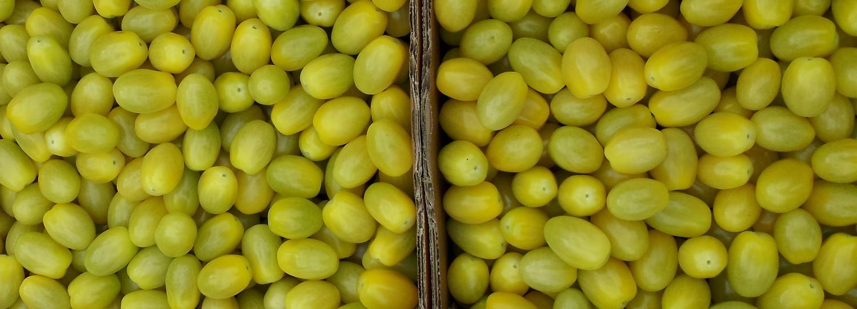 petites tomates jaunes