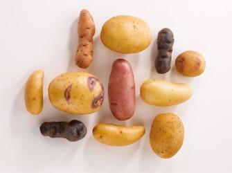 varietes-de-pommes-de-terre
