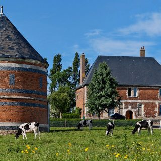Manoir et colombier normands, vaches.