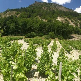 Vignoble Allemand home