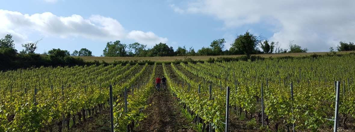 terre de vin