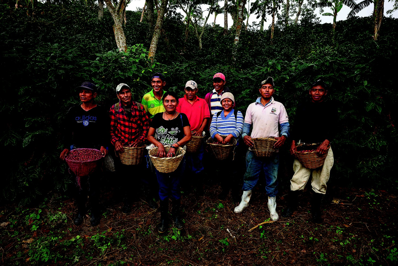 Dans la récolte manuelle ou picking, les ouvriers agricoles prélèvent les cerises mûres une à une, garantissant ainsi un ensemble homogène et de bonne qualité.