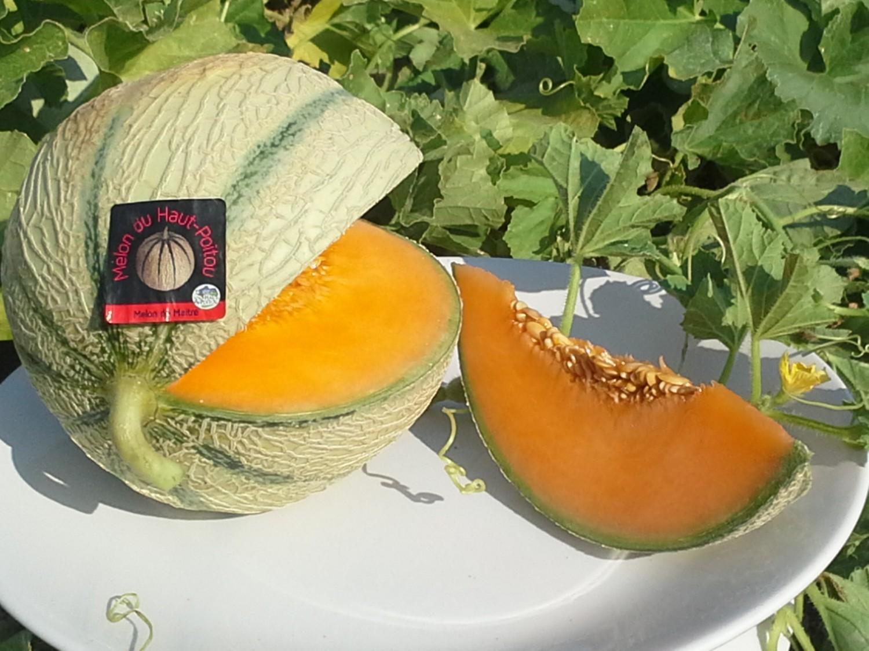 melon assiette Home