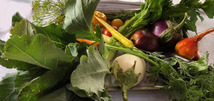 potager passard divers légumes