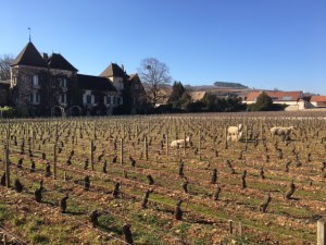 moutons bourgogne