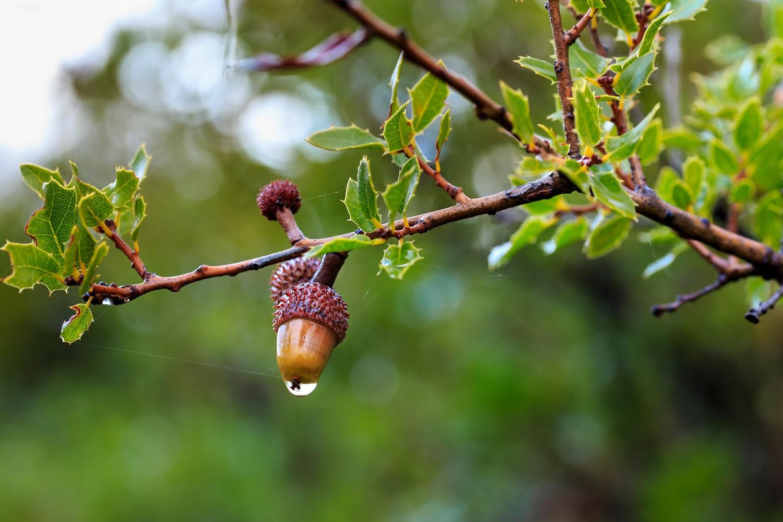 glands sur la branche