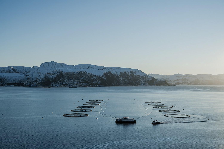 saumon MOWI bassins d'élevage  ©DR