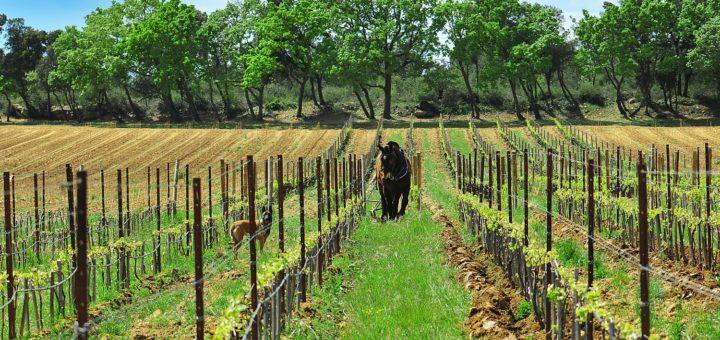 cheval et chien dans la vigne ©DR