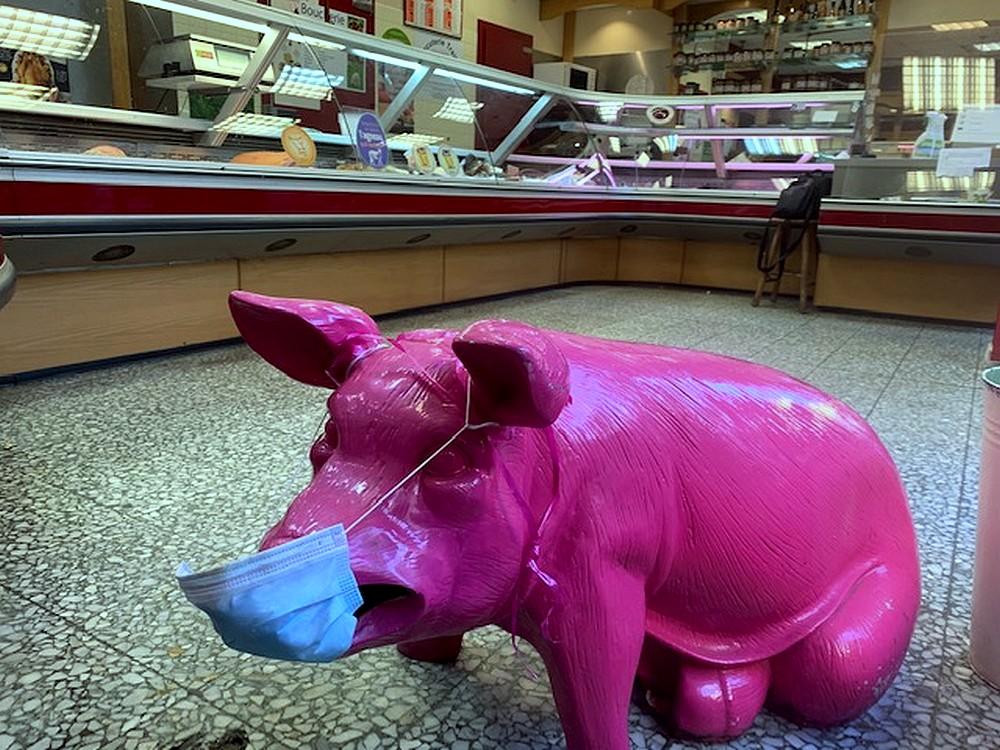 cochon rose et confiné ©T.Bourgeon/laradiodugout.fr