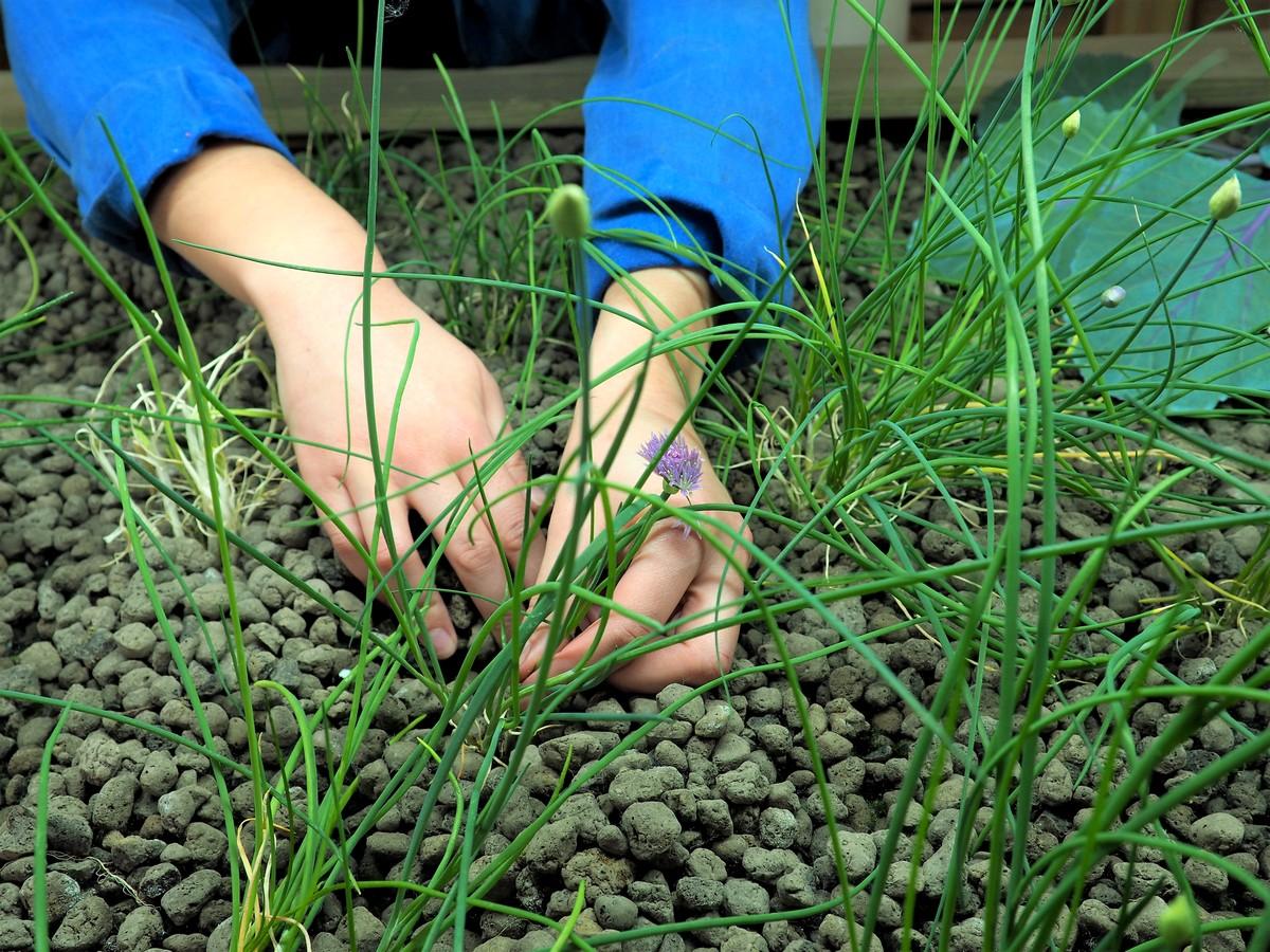 de l'eau et des plantes ©DR