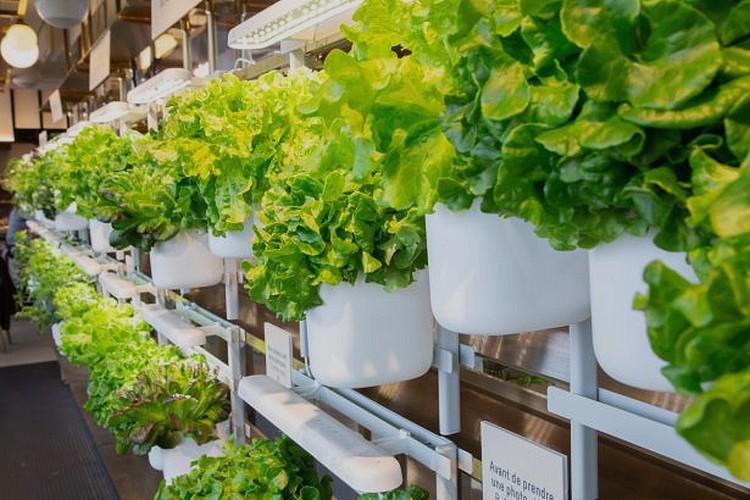 mur de salades ©DR
