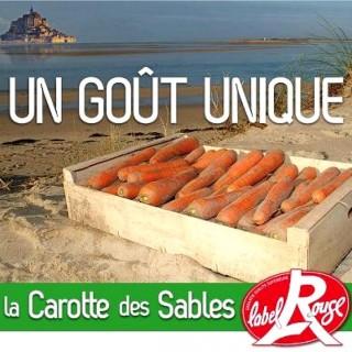 carottes des sables