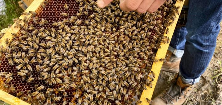 les abeilles ouvrières ©DR