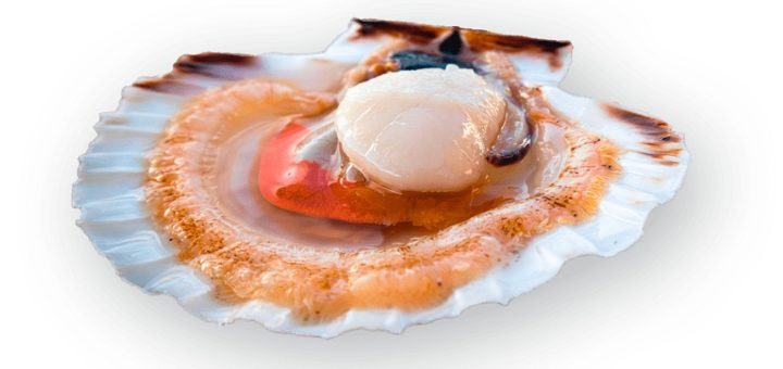 coquille saint jacques home